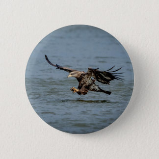 Immature Bald Eagle diving for a fish Pinback Button