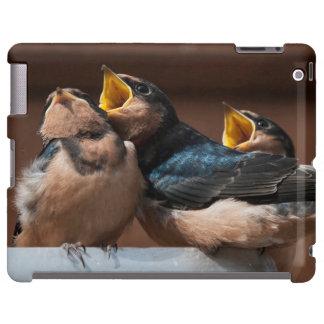 Immature Barn Swallow (Hirundo Rustica)