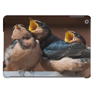 Immature Barn Swallow (Hirundo Rustica) Cover For iPad Air