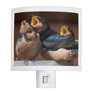 Immature Barn Swallow (Hirundo Rustica) Night Lites