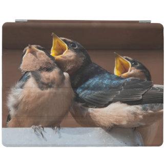 Immature Barn Swallow (Hirundo Rustica) iPad Cover