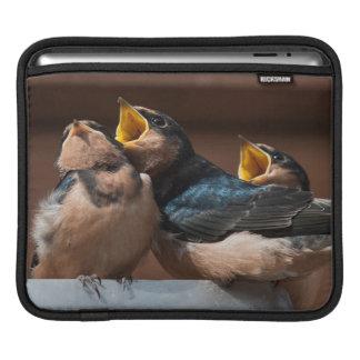Immature Barn Swallow (Hirundo Rustica) iPad Sleeve