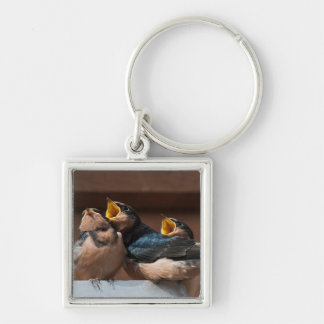 Immature Barn Swallow (Hirundo Rustica) Key Chains