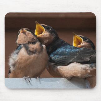Immature Barn Swallow (Hirundo Rustica) Mouse Pad