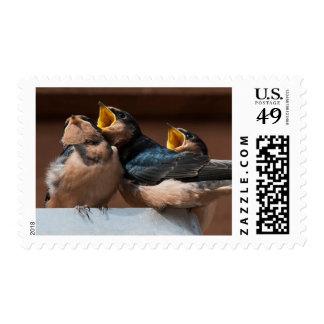 Immature Barn Swallow (Hirundo Rustica) Postage