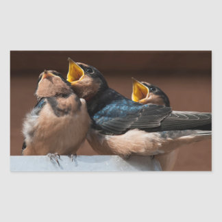 Immature Barn Swallow (Hirundo Rustica) Rectangular Sticker
