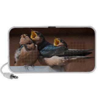 Immature Barn Swallow (Hirundo Rustica) Portable Speaker