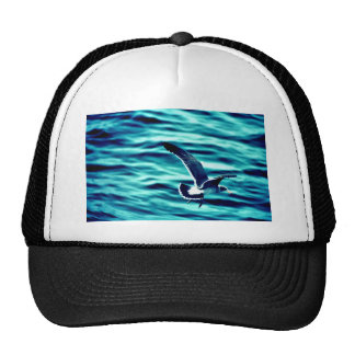 Immature California Gull Hats