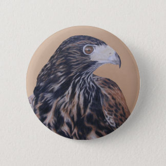 Immature Harris Hawk Pinback Button