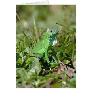 Immature Iguana  Card