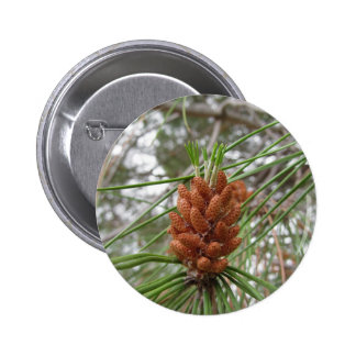 Immature male or pollen cones of pine tree button