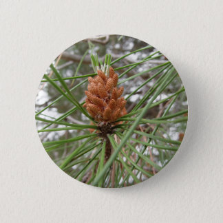 Immature male or pollen cones of pine tree pinback button