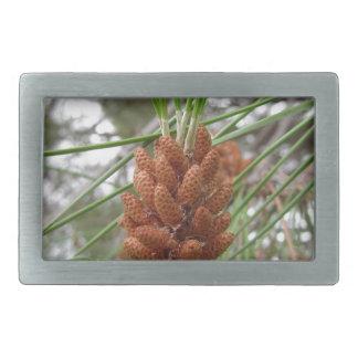 Immature male or pollen cones of pine tree rectangular belt buckle