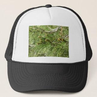 Immature male or pollen cones of pine tree trucker hat