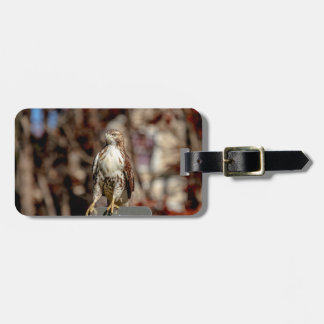 Immature Red Tailed Hawk Bag Tag
