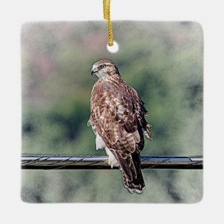Immature Red Tailed Hawk Ceramic Ornament