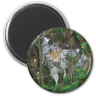 Immature Red Tailed Hawk Coordinating Items 2 Inch Round Magnet