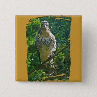 Immature Red Tailed Hawk Coordinating Items Button