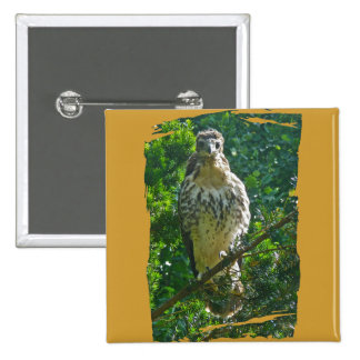 Immature Red Tailed Hawk Coordinating Items 2 Inch Square Button