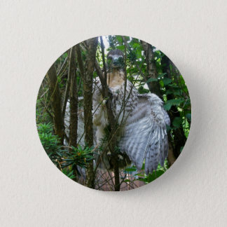 Immature Red Tailed Hawk Coordinating Items Pinback Button