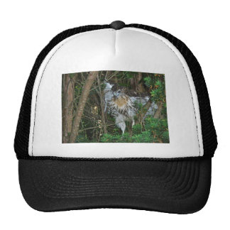 Immature Red Tailed Hawk Coordinating Items Trucker Hat