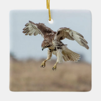 Immature Red Tailed Hawk Hovering Ceramic Ornament