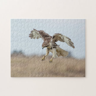 Immature Red Tailed Hawk Hovering Jigsaw Puzzle