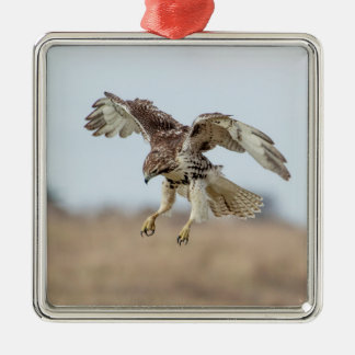 Immature Red Tailed Hawk Hovering Metal Ornament