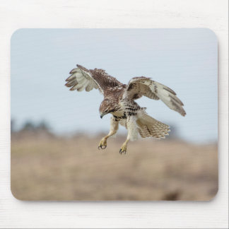 Immature Red Tailed Hawk Hovering Mouse Pad