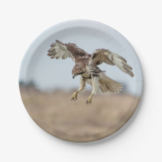 Immature Red Tailed Hawk Hovering Paper Plate