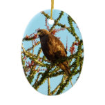 Immature Red-Tailed Hawk in Ocotillo (Joshua Tree) Ceramic Ornament