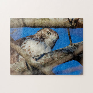 Immature Red Tailed Hawk Jigsaw Puzzle