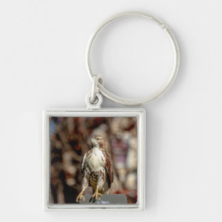 Immature Red Tailed Hawk Keychain