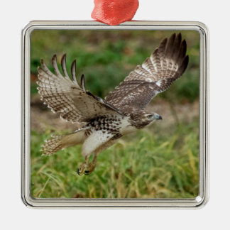 Immature Red Tailed Hawk Metal Ornament