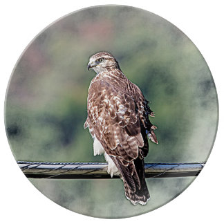 Immature Red Tailed Hawk Porcelain Plate