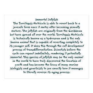 Immortal Jellyfish Postcard