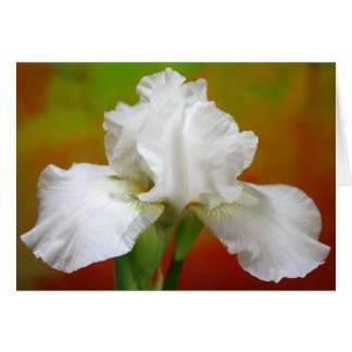"""Immortality"" Iris Photography Greeting Card"