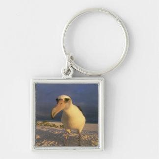 Immutabilis del albatros, de Diomedea de Laysan), Llavero Personalizado