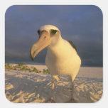 Immutabilis del albatros, de Diomedea de Laysan), Colcomania Cuadrada