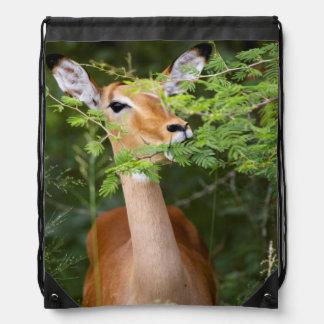 Impala (Aepyceros Malampus) Drawstring Backpack