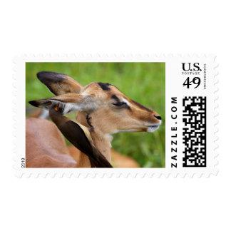 Impala (Aepyceros Malampus) Juvenile Postage