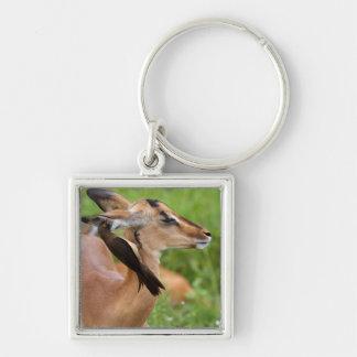 Impala (Aepyceros Malampus) Juvenile Silver-Colored Square Keychain