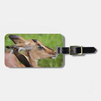Impala (Aepyceros Malampus) Juvenile Tag For Luggage