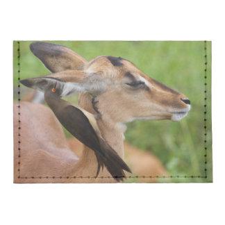Impala (Aepyceros Malampus) Juvenile Tyvek® Card Case Wallet