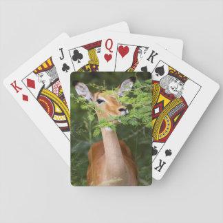 Impala (Aepyceros Malampus) Poker Cards
