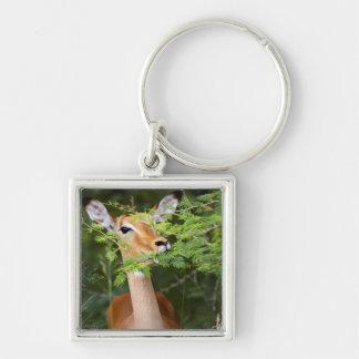 Impala (Aepyceros Malampus) Silver-Colored Square Keychain