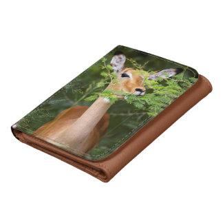 Impala (Aepyceros Malampus) Wallets