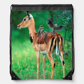Impala (Aepyceros Melampus) Drawstring Backpack