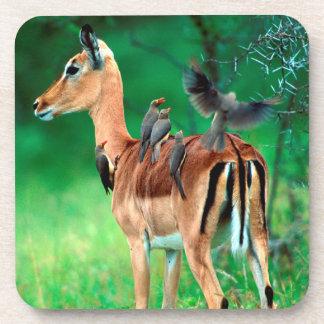 Impala (Aepyceros Melampus) Drink Coaster