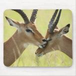 Impala, Aepyceros melampus, in the Masai Mara Mousepads